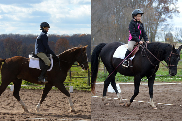 lost creek ranch beldenville wi youth dressage