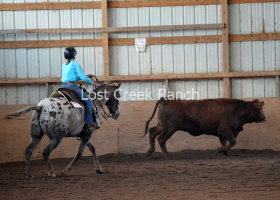 youth working cow horse lost creek ranch wi